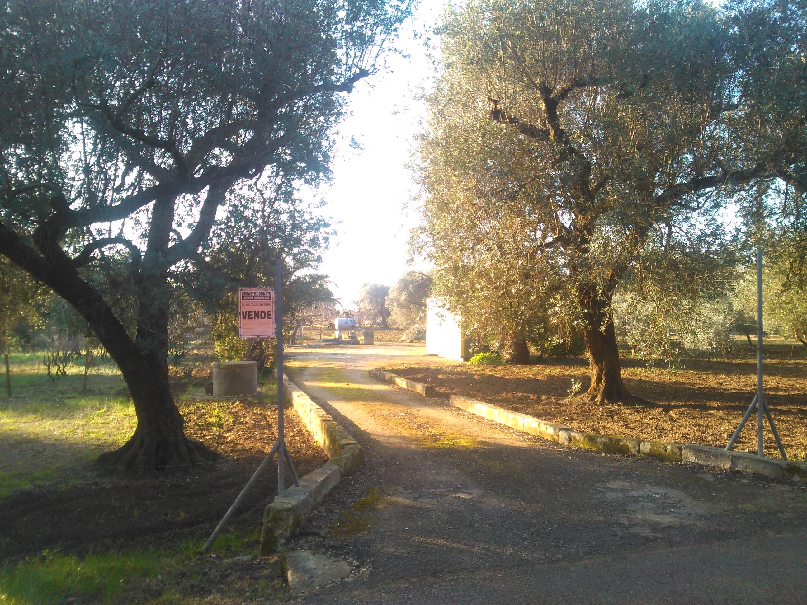 Mesagne (BR) c.da San Paolo - Via Vecchia Latiano